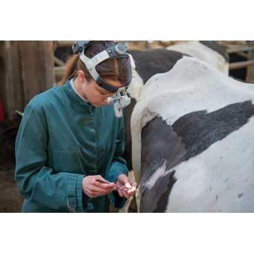 HEINE ML4 LED Headlight UNPLUGGED para veterinaria